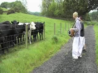 Chanting to poor cows
