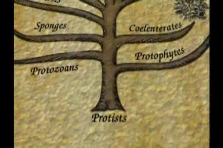 Origin of Life 4 -- How Did Life Begin